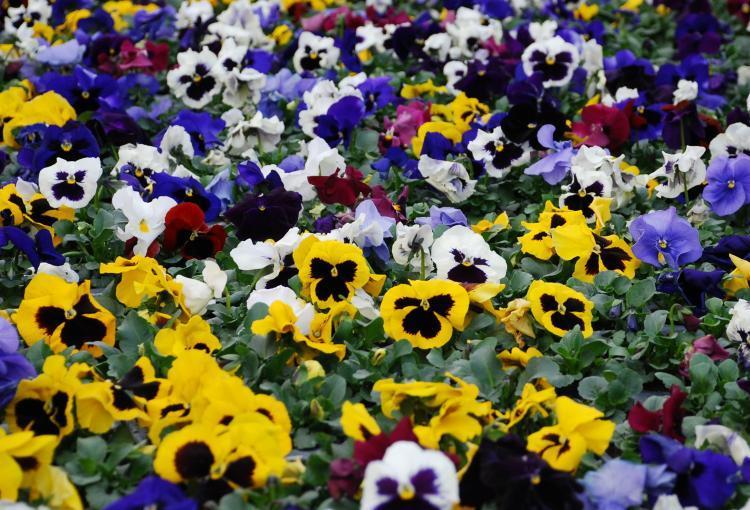 Blumen t rpitz deutsch g rtnerei beet und balkon for Besondere topfpflanzen