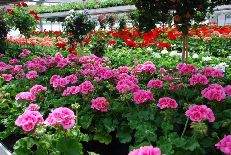 Blumen t rpitz deutsch wir ber uns bildergalerie for Besondere topfpflanzen