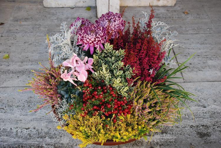 Blumen t rpitz deutsch trauerfloristik pflanzenschalen for Besondere topfpflanzen